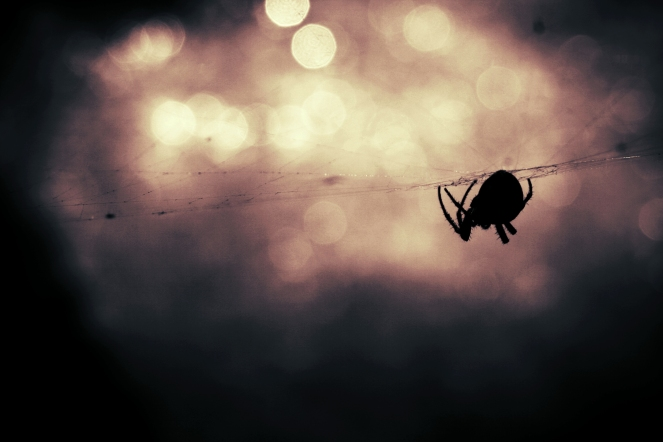 animal-silhouette-bokeh-insect