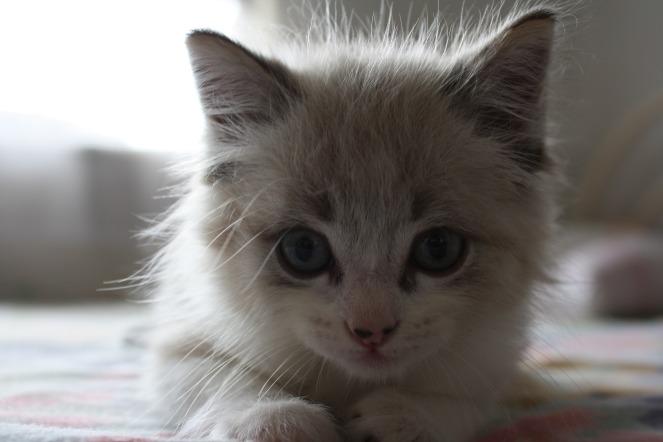 cat-2774283_1920