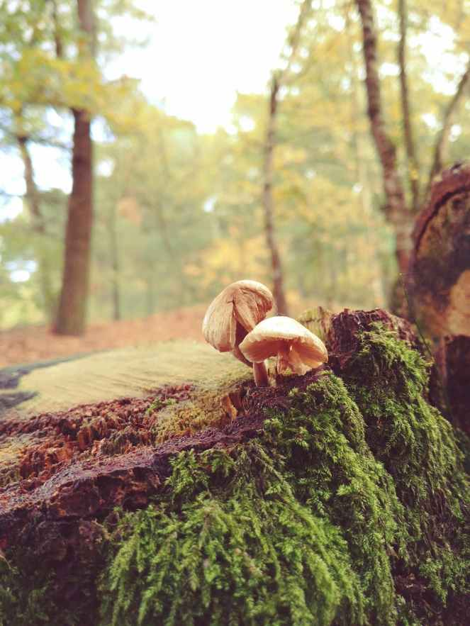 two mushrooms with green plants