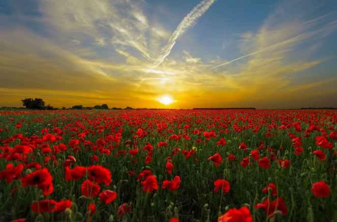 sunset sun horizon priroda